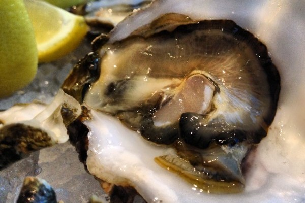 Hog Island Sweetwater (Pacific)  Oyster